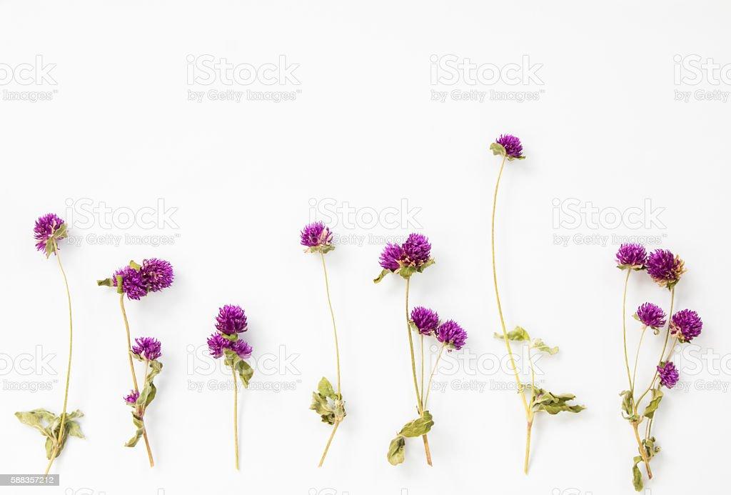 Dried purple flower stock photo