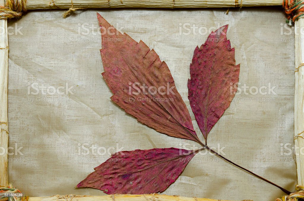 Dried red leaves in a vintage frame royalty-free stock photo