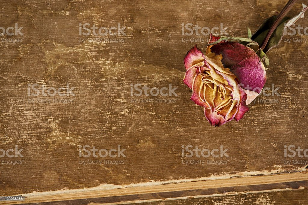 Dried rose on leather background stock photo