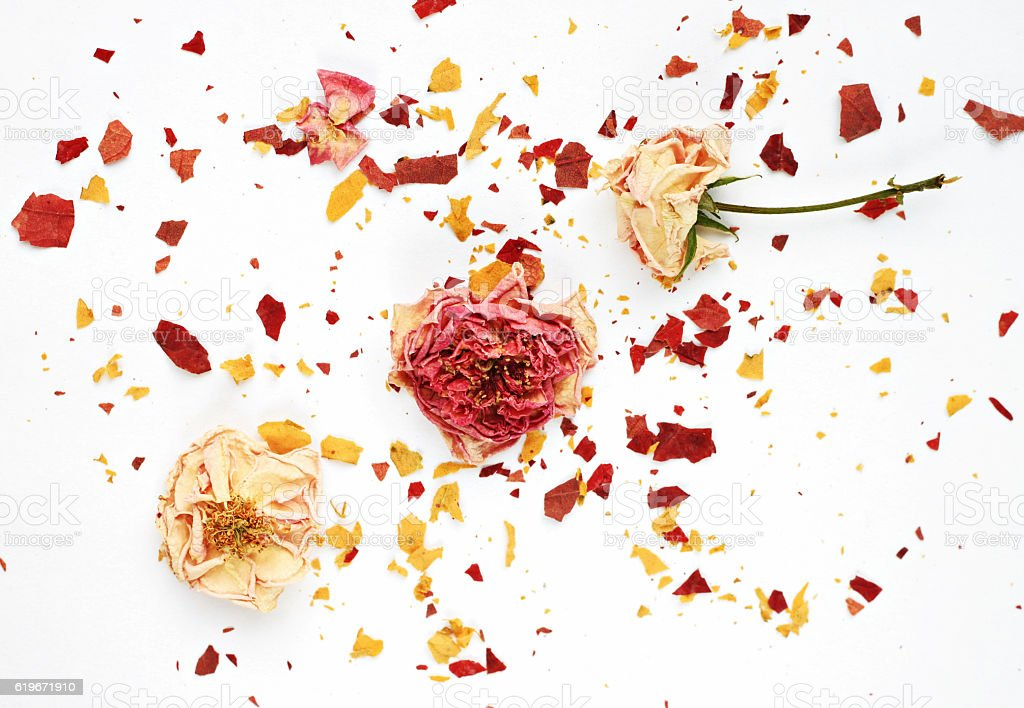 Dried rosebuds and crushed crisp petals background. stock photo