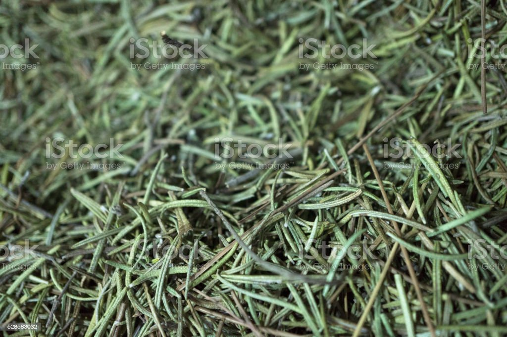 dried rosemary needles stock photo