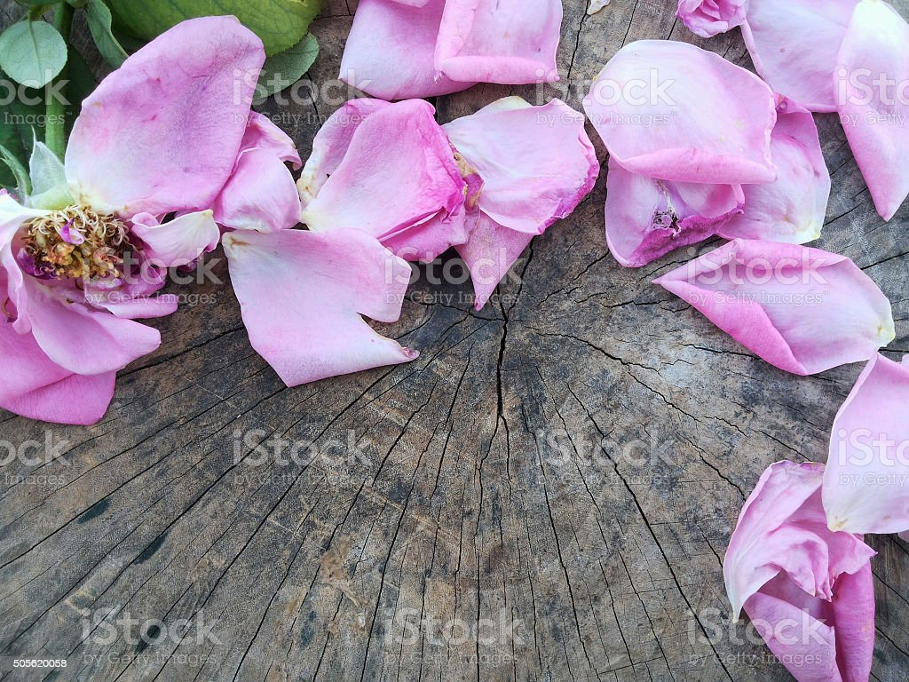 Dried roses and petals on rustic wooden background stock photo
