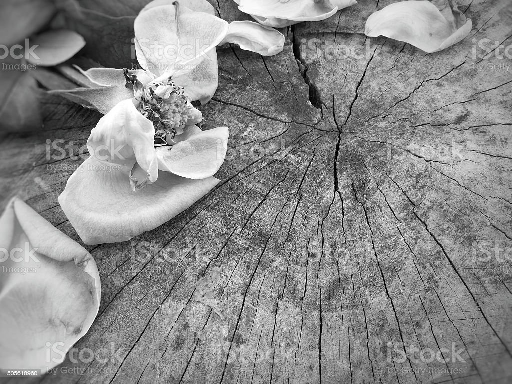 Dried roses and petals on rustic wooden in black and white stock photo