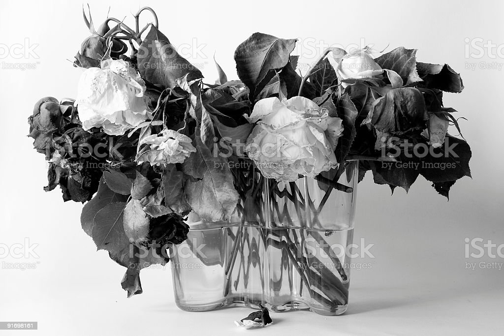 Dried roses B&W stock photo