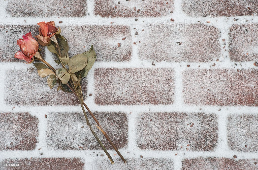 Dried roses on snowy brick background. stock photo