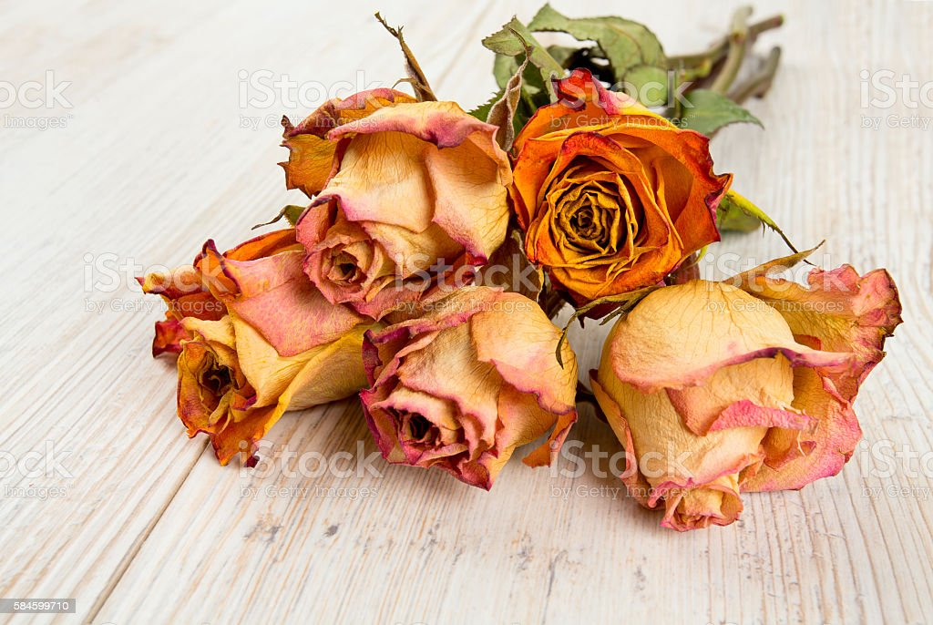 dried roses on wooden surface stock photo