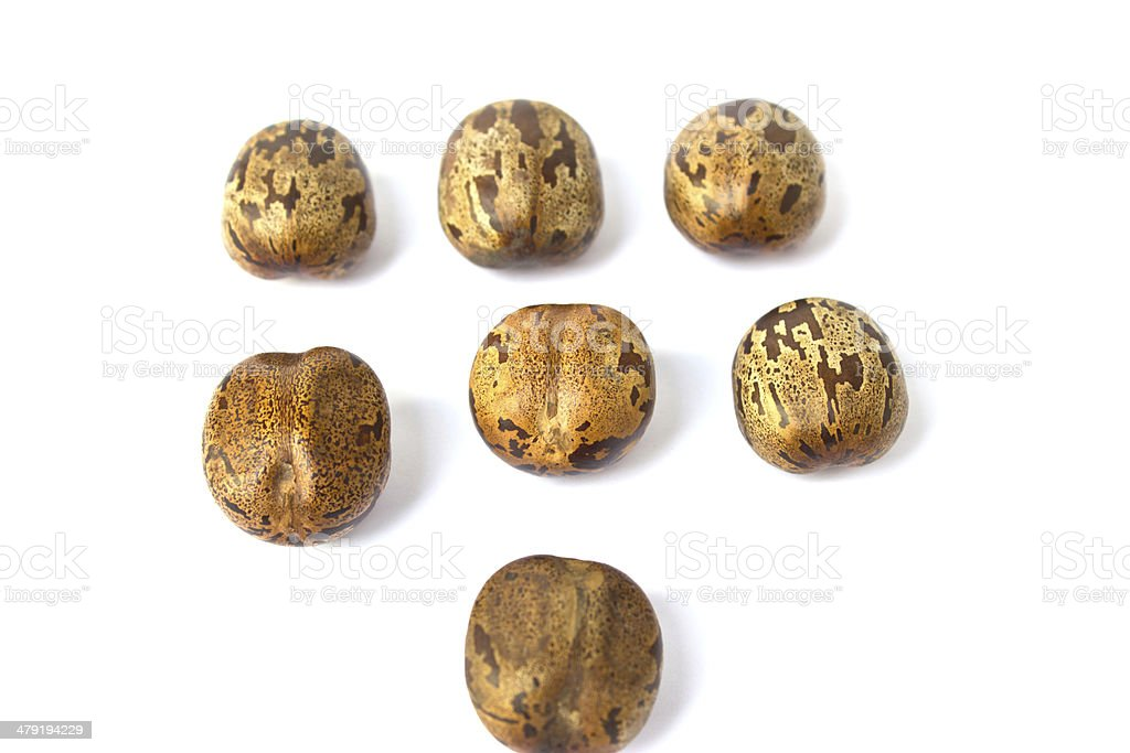 Dried Rubber Seeds royalty-free stock photo