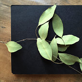 Dried Ruscus Leaves