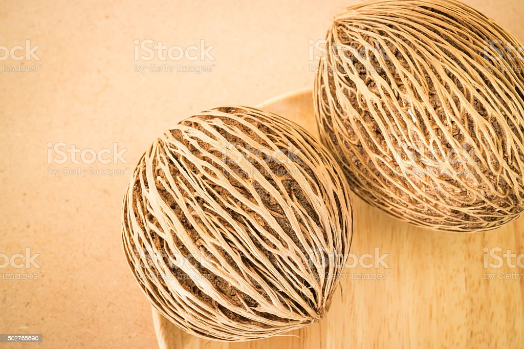 Dried seeds with beautiful lines of the Suicide Tree stock photo