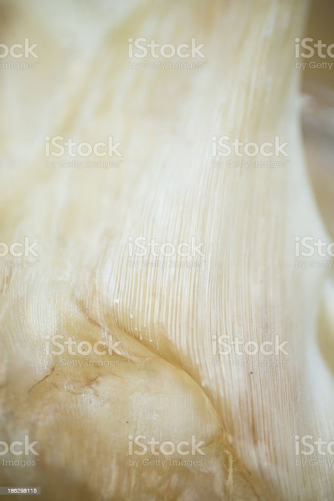 Dried Shark Fin for Sale stock photo