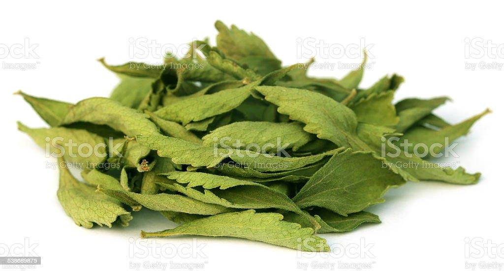 Dried Stevia leaves stock photo