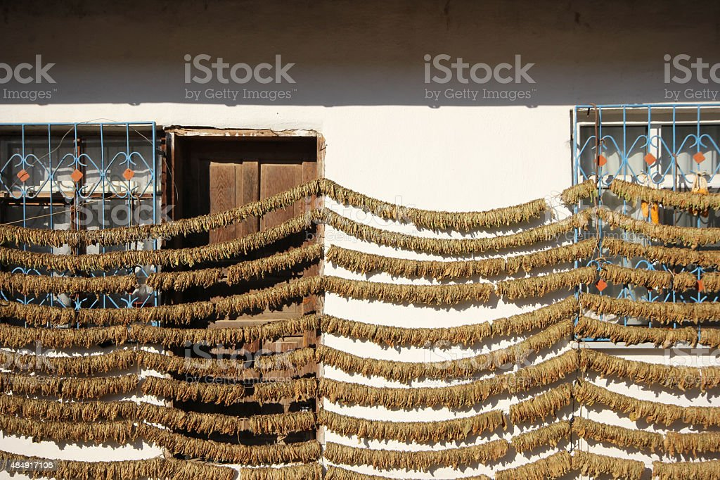 Dried tobacco stock photo