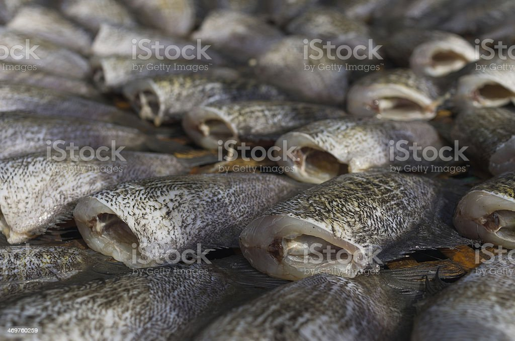 Dried Trichogaster pectoralis fish royalty-free stock photo