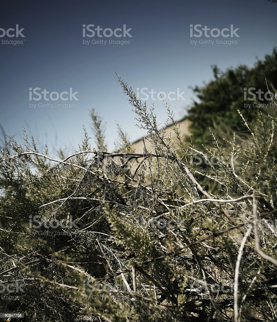 Dried Up Brush in the Wilderness stock photo