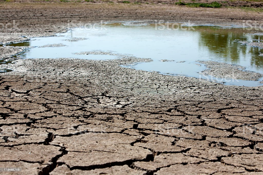 Dried up mud at a watering hole stock photo