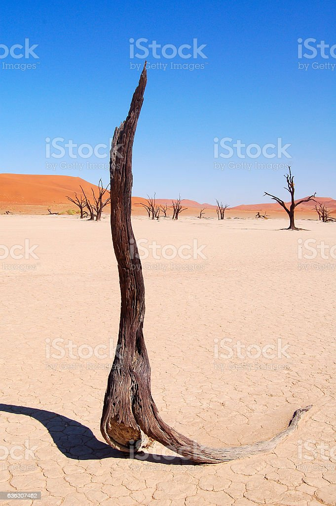 Dried up tree in Sossusvlei stock photo