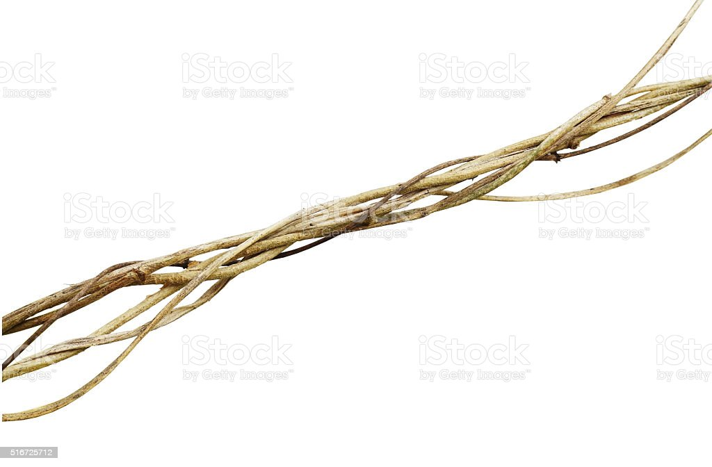 Dried wild vines on white background, clipping path included stock photo