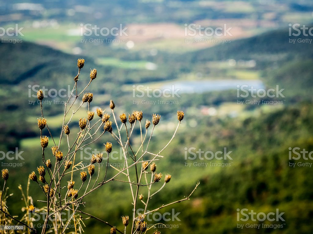Dried Wildflowers with Distant Valley Landscape stock photo