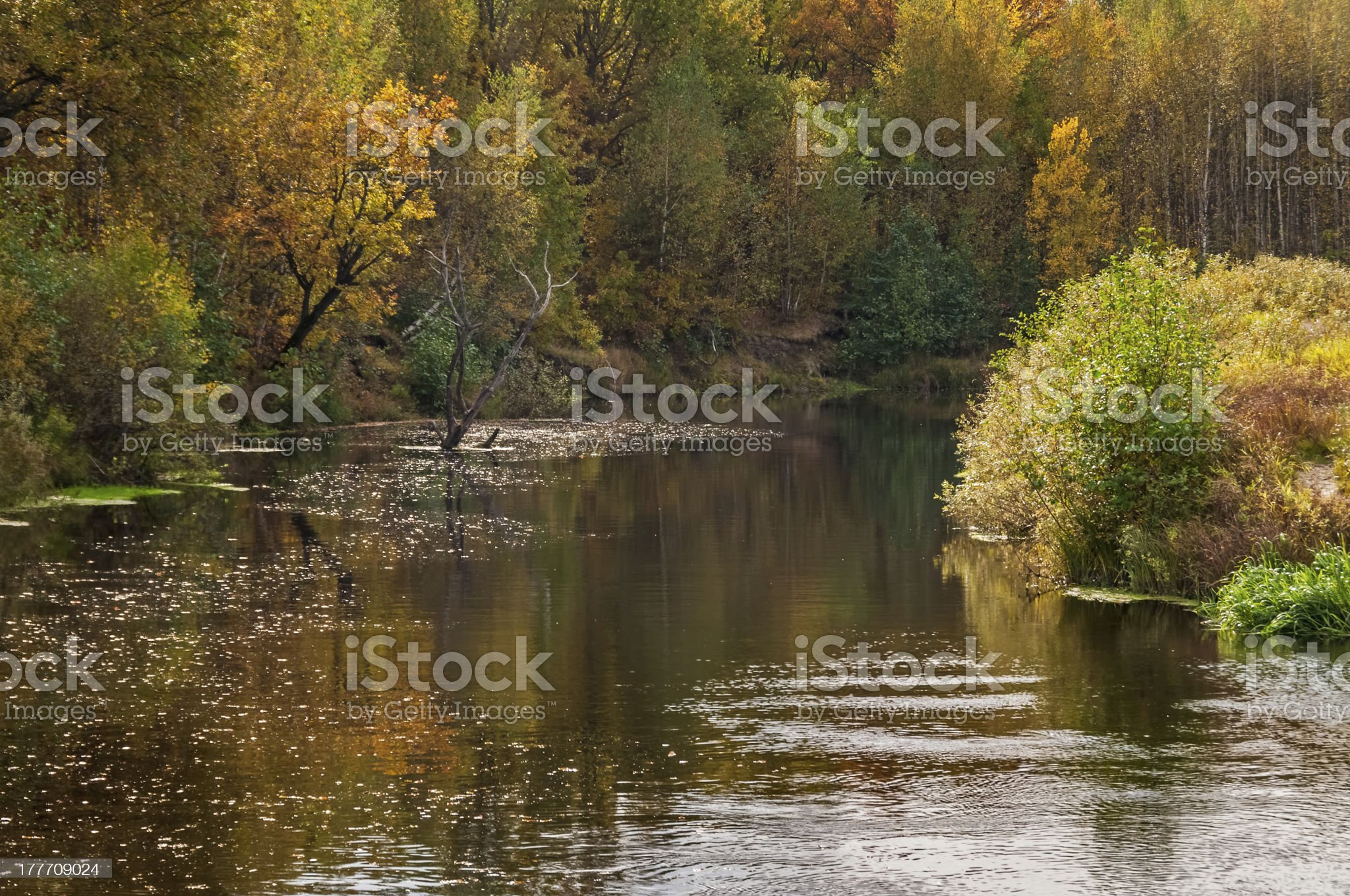 Dried-up tree stays in river with motley growth on riverside royalty-free stock photo