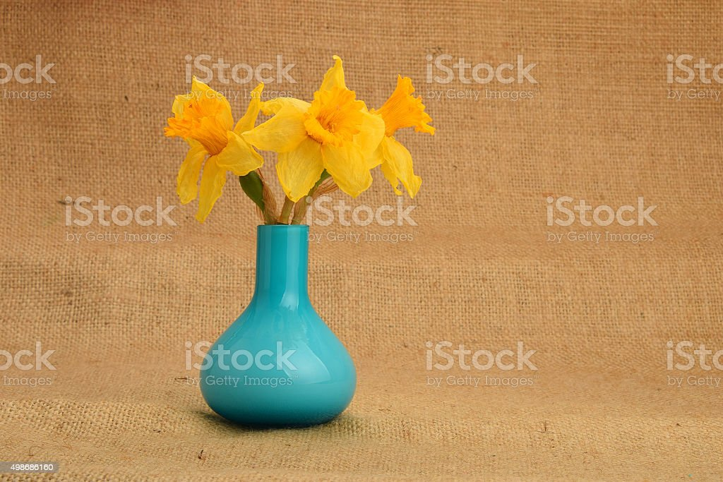 Dried-up yellow narcissus bouquet in a blue vase royalty-free stock photo