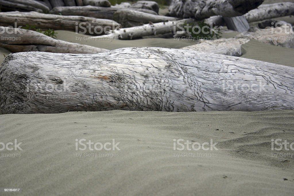 drift wood and sand stock photo