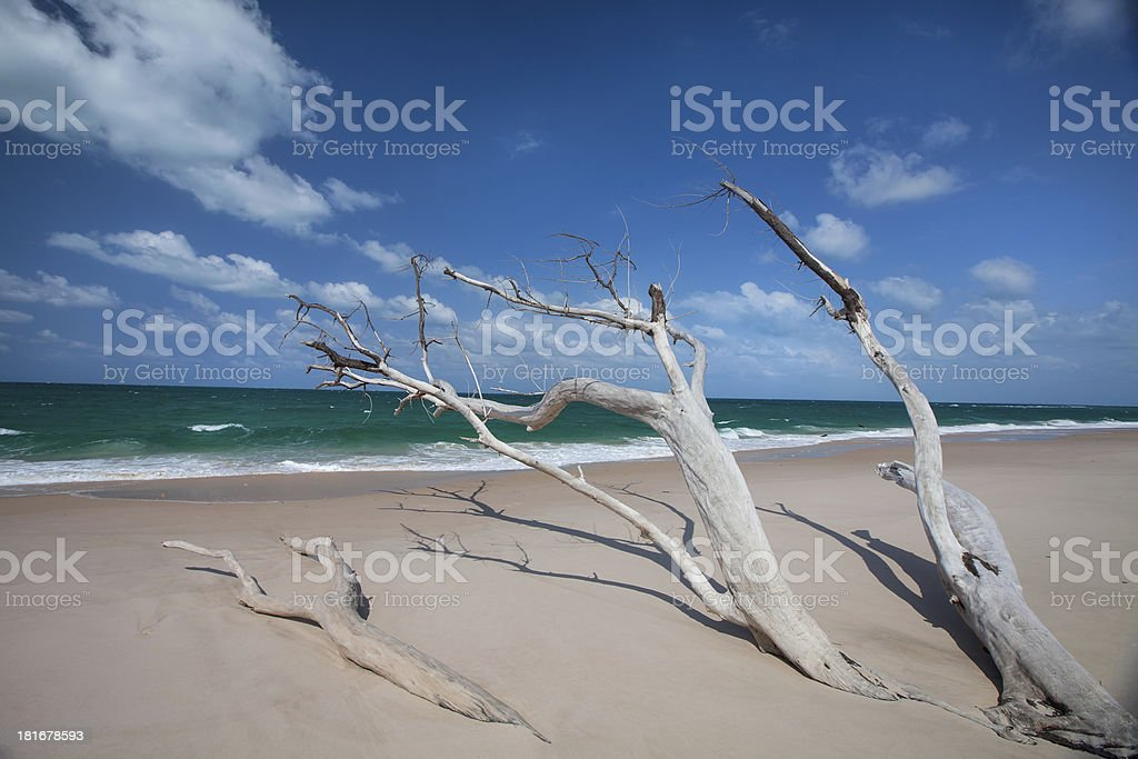 Drift Wood Beach on Benguerra Island stock photo