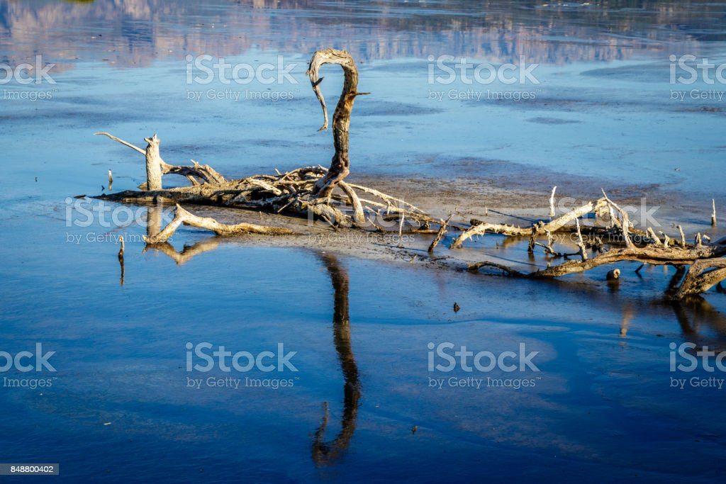 Drift wood in the dried up lake stock photo
