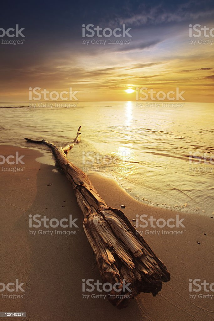Drift Wood On The Beach During Colorful Sunset royalty-free stock photo