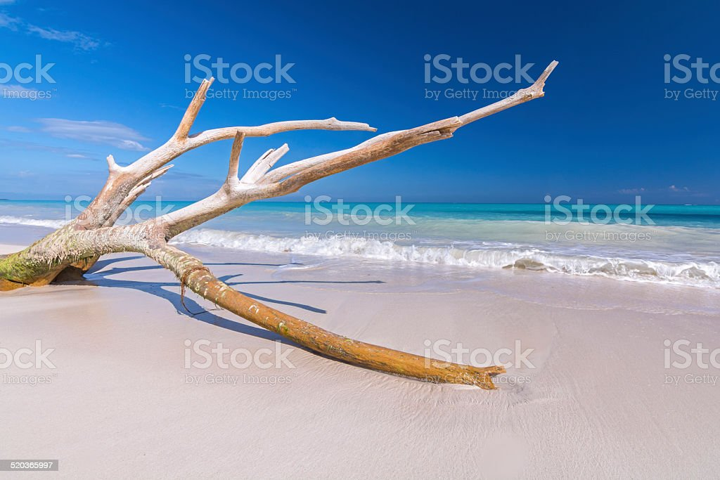 Drift wood on tropical beach stock photo