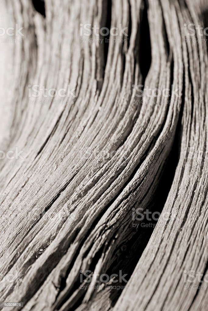 drift wood royalty-free stock photo