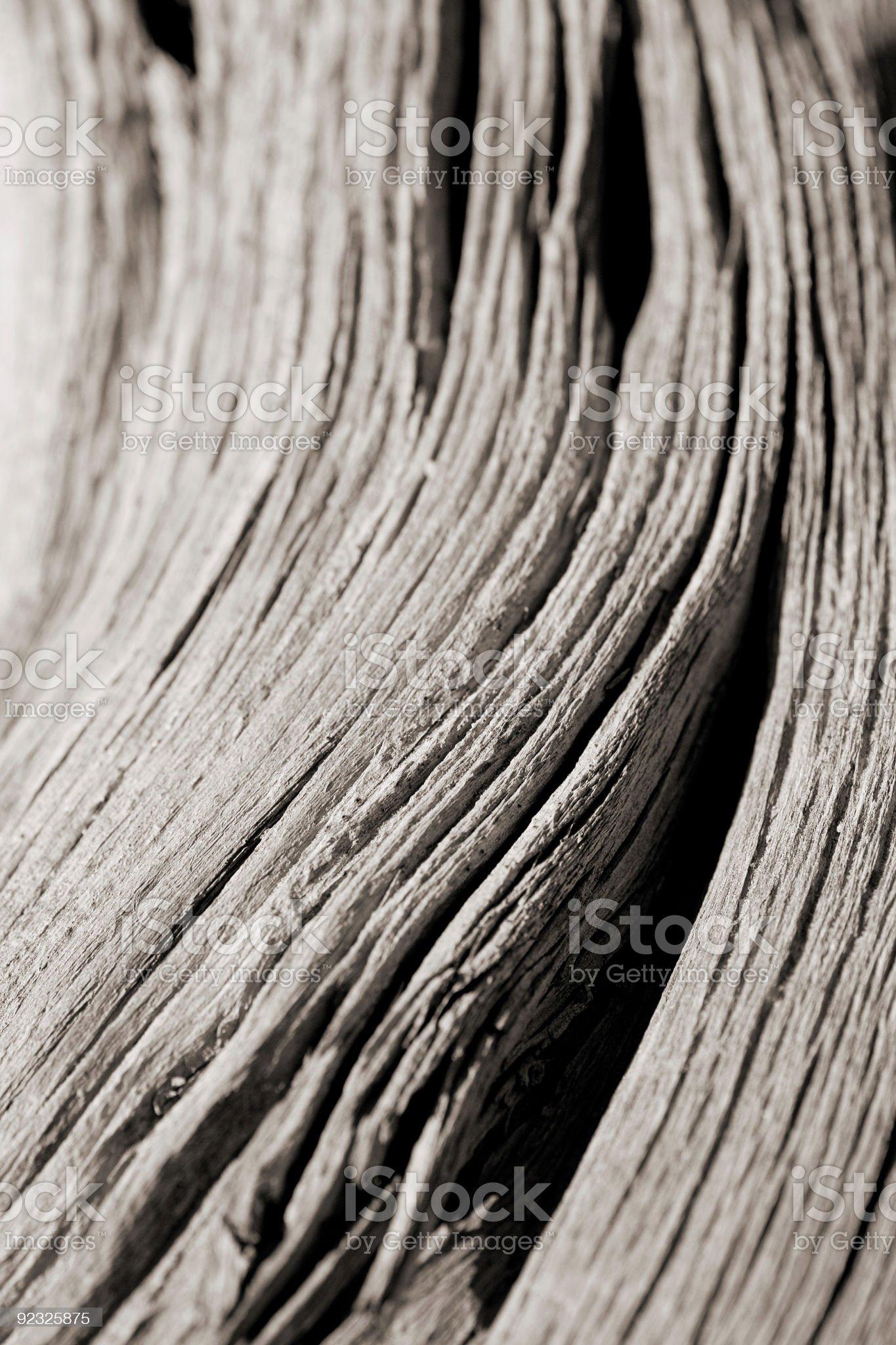 drift wood royalty-free stock photo