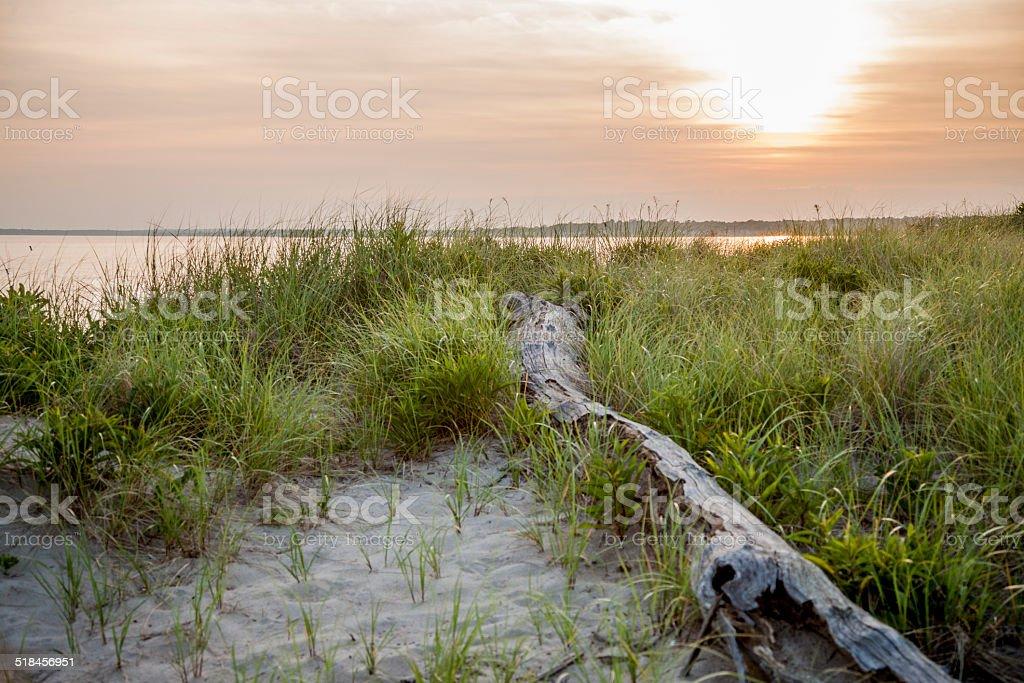 Drift Wood Sunset stock photo
