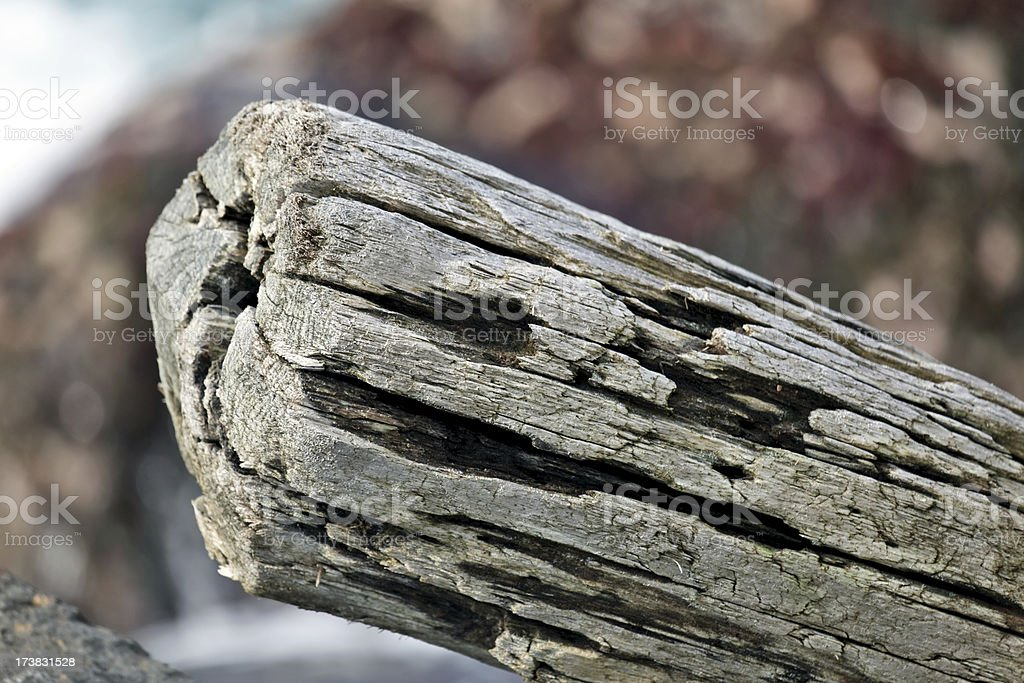 Drift wood washed a shore royalty-free stock photo