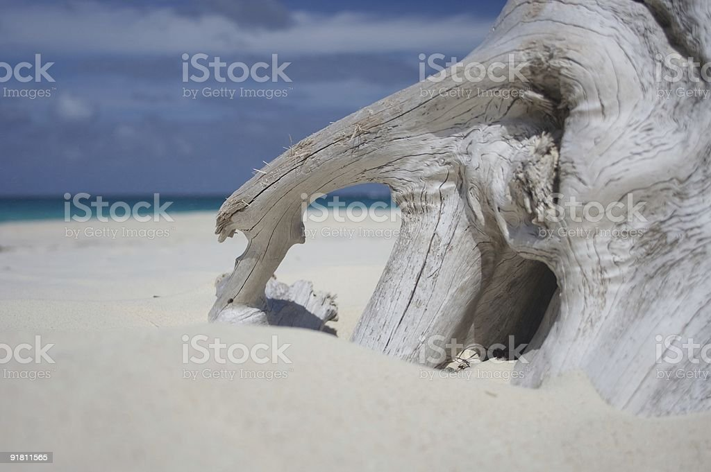 Driftwood 1 royalty-free stock photo