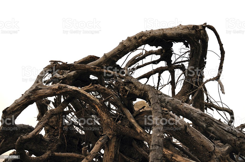 driftwood abstract tree branches royalty-free stock photo