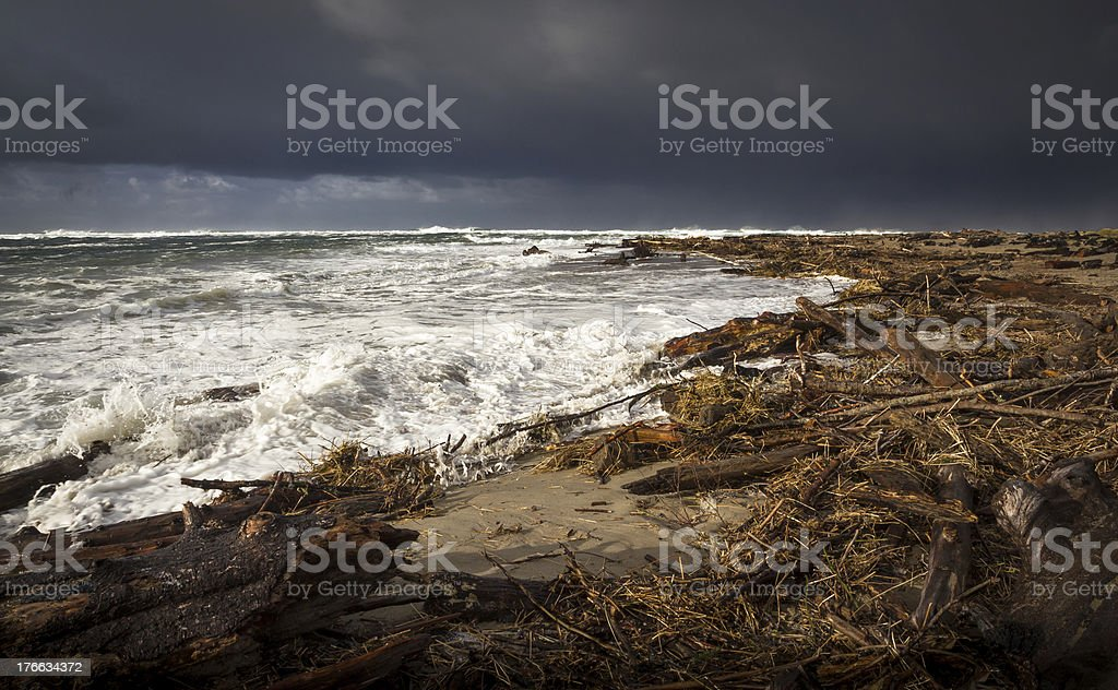 Driftwood After the Storm royalty-free stock photo