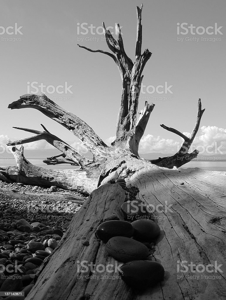Driftwood and Beach Rocks stock photo
