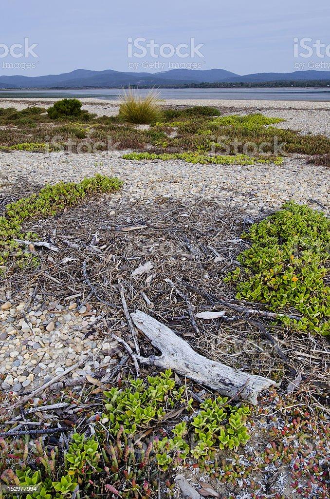 Driftwood and coastal habitat, Nawrantapu National Park, Tasmania stock photo