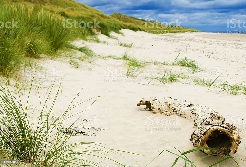 Driftwood and Dunes royalty-free stock photo
