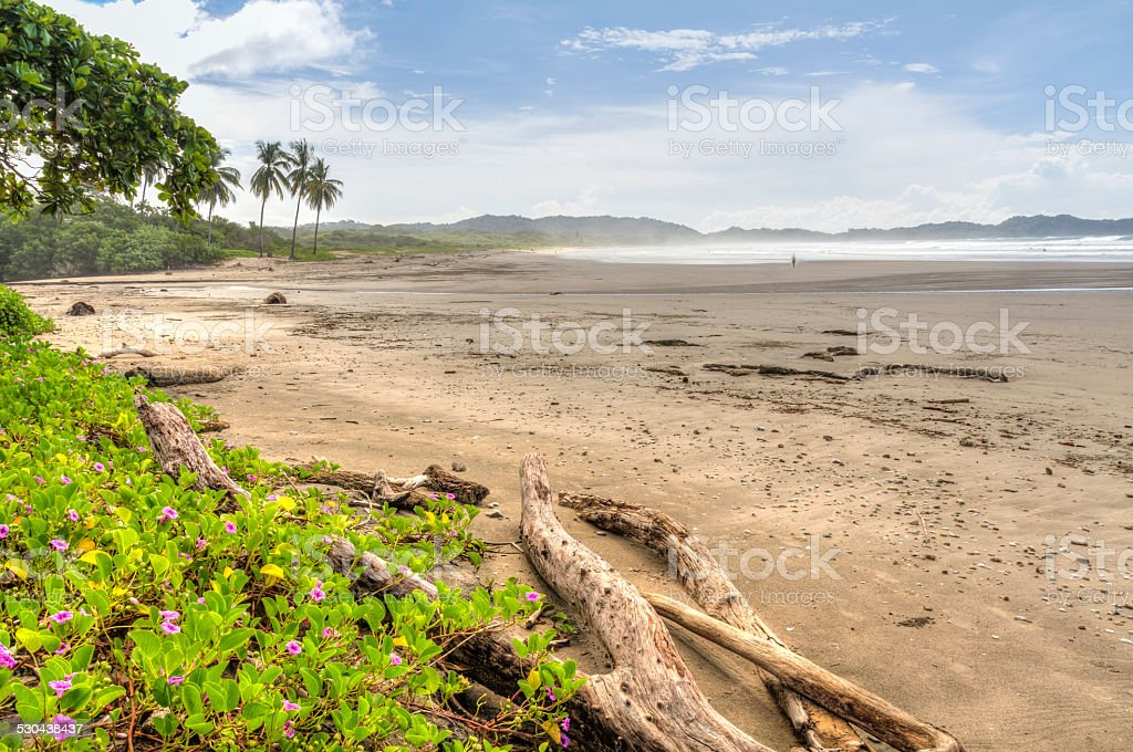 Driftwood and Flowers on Misty Play Guiones stock photo