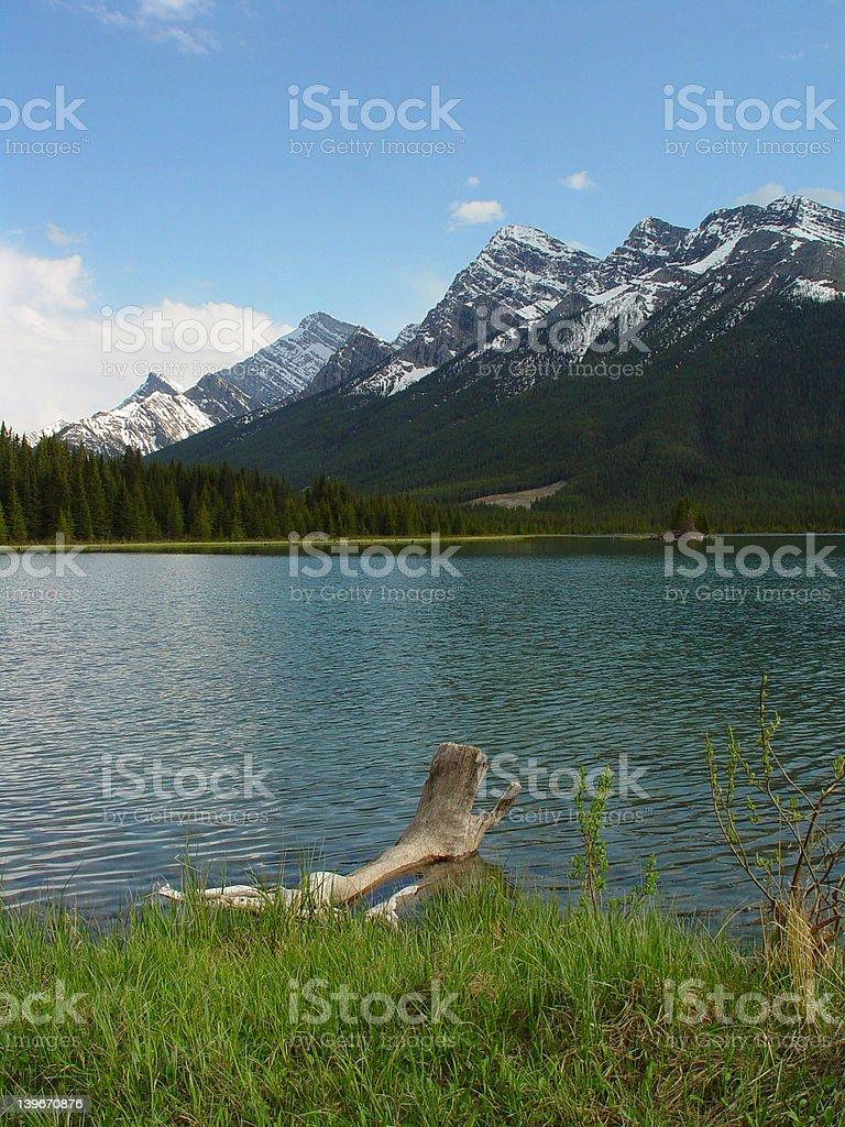 driftwood and mountain lake royalty-free stock photo