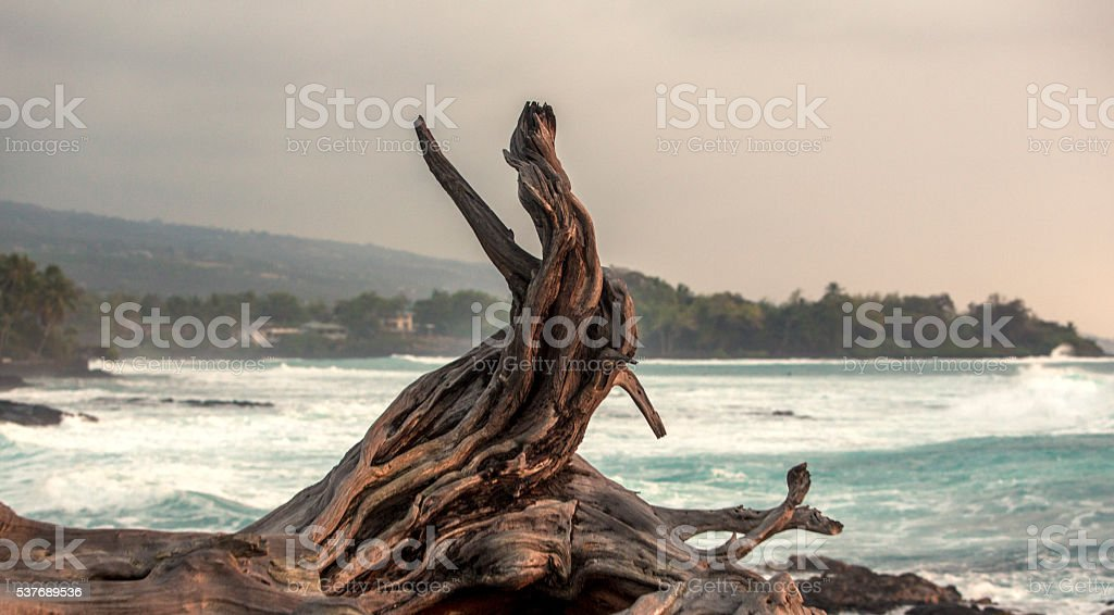 Driftwood and Stormy Shore stock photo