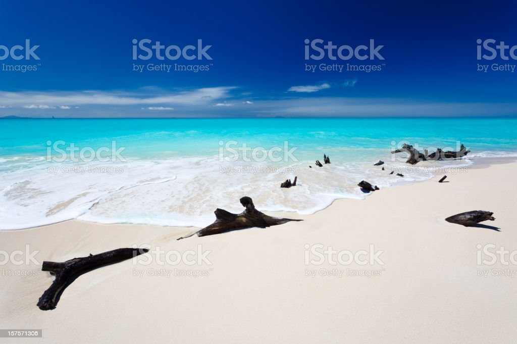 Driftwood At Caribbean Beach stock photo
