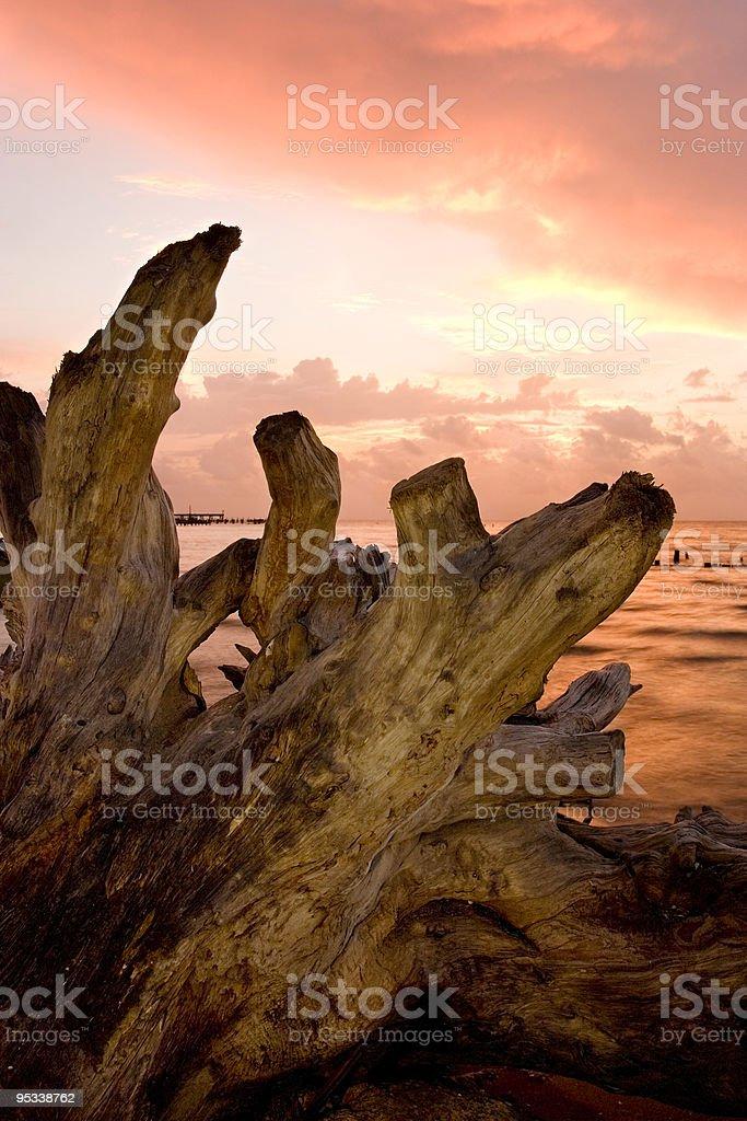Driftwood at Dawn royalty-free stock photo