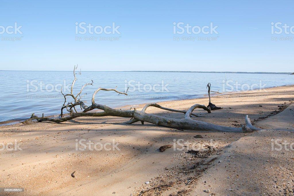 Driftwood at shore of calm beach stock photo
