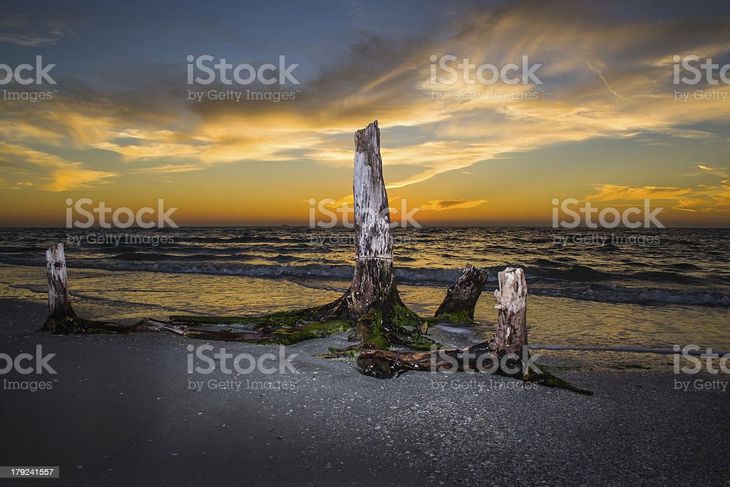 Driftwood at Sunset royalty-free stock photo