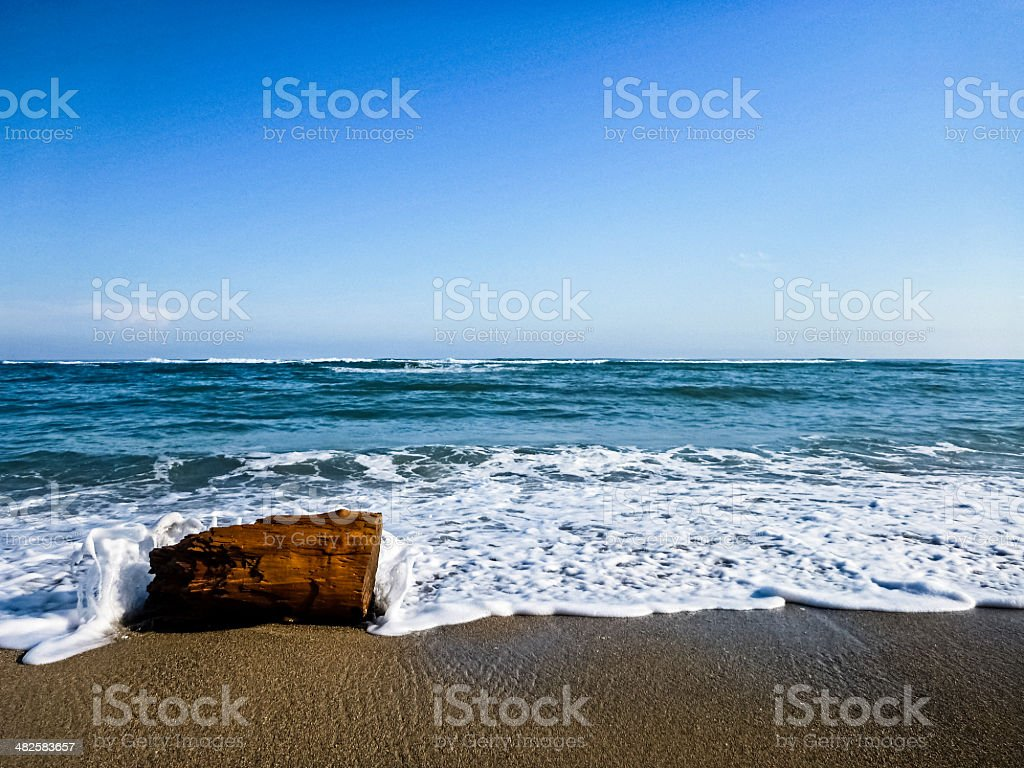Driftwood at the beach stock photo