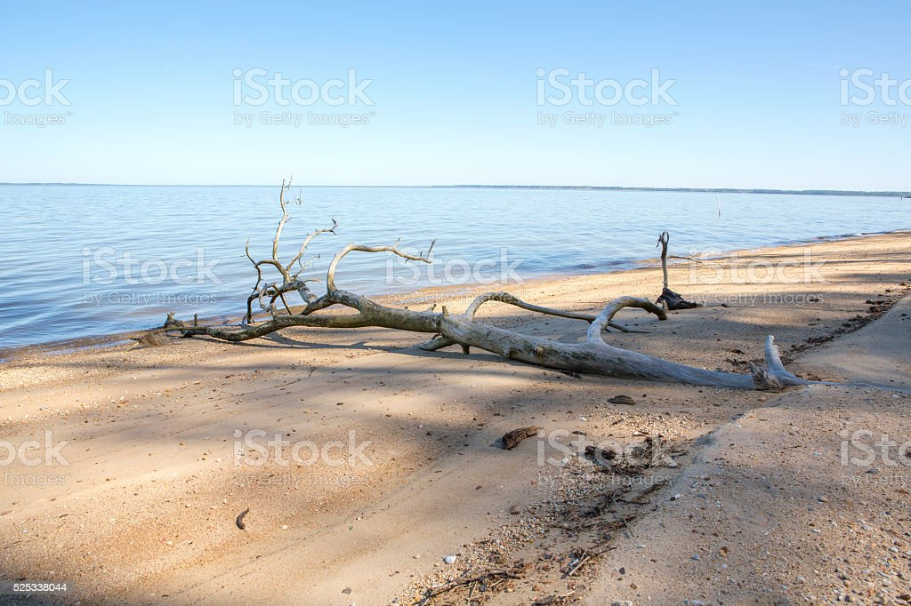 Driftwood at the shore of calm beach stock photo