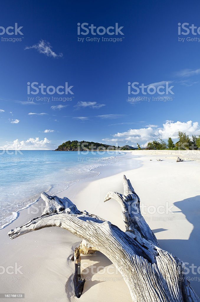 Driftwood At White Beach With Blue Sky royalty-free stock photo