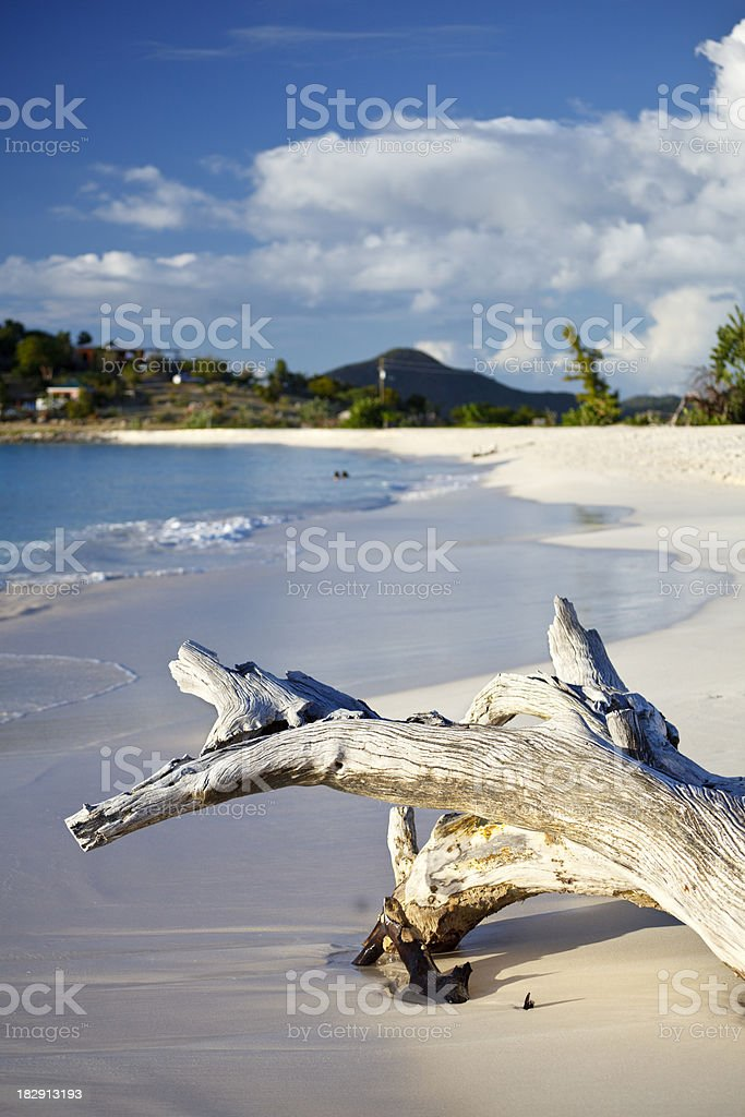 Driftwood At White Beach With Blue Sky stock photo